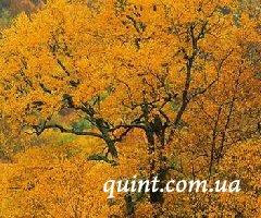 В Белой Церкви состоится фестиваль «Золота осінь»